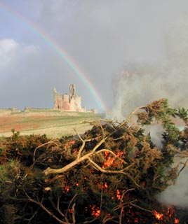 Rainbow over Dunstanburgh Castle. Gorse burning in foreground